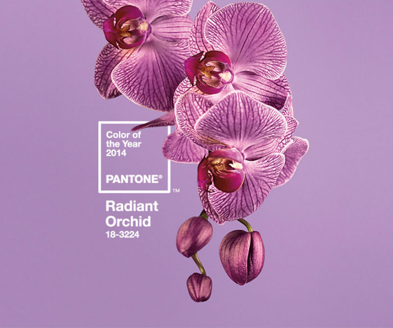 "Pantone's color of the Year for 2014: ""Radiant Orchid."" Image courtesy of www.pantone.com."